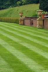 Stripe on lawn Weibang